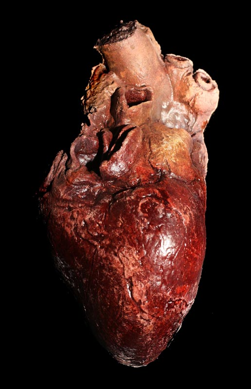 working of heart in human body pdf